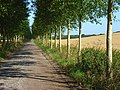 Bridleway, Boxford - geograph.org.uk - 928052.jpg