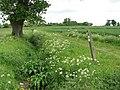 Bridleway following drainage ditch - geograph.org.uk - 1314425.jpg