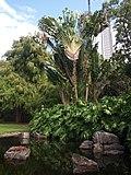 Brisbane City Botanic Gardens (08).jpg