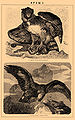 Brockhaus and Efron Encyclopedic Dictionary b43 172-1.jpg