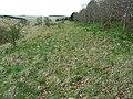 Brouncker's Down, Wiltshire - geograph.org.uk - 761978.jpg