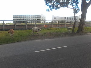 Bangabandhu Sheikh Mujibur Rahman Science and Technology University - Bsmrstu Campus