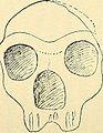 Bulletin de la Société fribourgeoise des sciences naturelles - compte-rendu (1908) (14784019952).jpg