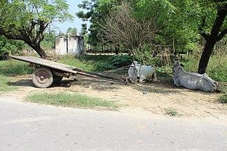 Bullock cart - Bullock Cart in Punjab