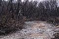 Burnt Forest 2 (8548402955).jpg
