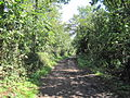 Burtonhole Lane.JPG