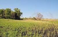 Burty preserve.JPG