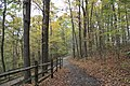 Buttermilk Falls - panoramio (10).jpg