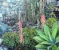 Cactus and Iron 7-012 (7502185442).jpg
