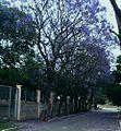 Calle florida.JPG