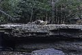 Camp Creek State Park - Marsh Fork Falls WV 3 LR.jpg