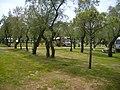Campingplatz Vigna Sul Mar Italien - panoramio (1).jpg