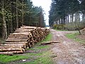 Cannock Chase, Slitting Mill - geograph.org.uk - 769820.jpg