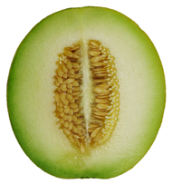 Cantaloupe Wikiwand History and etymology for cantaloupe. cantaloupe wikiwand