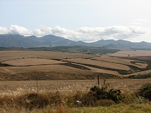 Overberg - Typical summer (dry season) Overberg landscape with the Babilonstoring Mountains beyond between Caledon and Bot River
