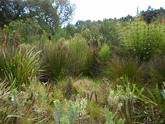 Cape Lowland Freshwater Wetland - Image: Cape Lowland Freshwater Wetland South Africa 5 restios