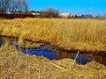 Capital Springs State Recreation Area - panoramio (1).jpg