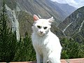 Carpapata, Peru - panoramio - Tours Centro Peru (27).jpg