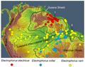 Carte du nord de l'Amérique du sud avec répartition de spécimens de 3 espèces d'anguilles électriques electrophorus.png