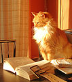 Cat with book 2320356657.jpg