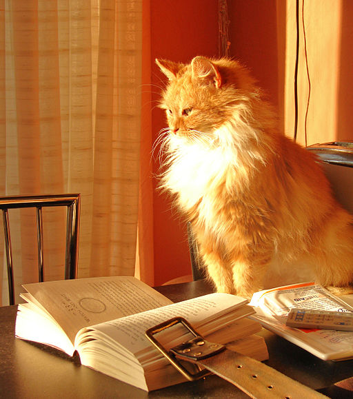 Cat with book 2320356657