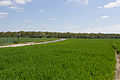 Chailly-en-Bière - 2013-05-04 - IMG 9739.jpg
