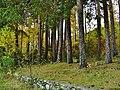 Chebarkulsky District, Chelyabinsk Oblast, Russia - panoramio (3).jpg