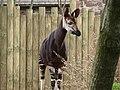 Chester Zoo (9484574363).jpg