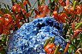Chile - Puerto Montt 26 - flowers (6837480678).jpg