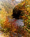 Chilhowee National Forest2.jpg