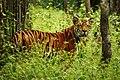 Chitwan nation Park-Ace vision Nepal.jpg