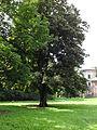 Ciężkowice park dworski, 2 poł. XIX nr 613934 (2).JPG