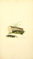 Coloured Figures of English Fungi or Mushrooms - t. 217.png