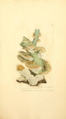Coloured Figures of English Fungi or Mushrooms - t. 229.png