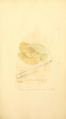 Coloured Figures of English Fungi or Mushrooms - t. 230.png
