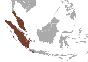 Description de l'image Common Treeshrew area.png.
