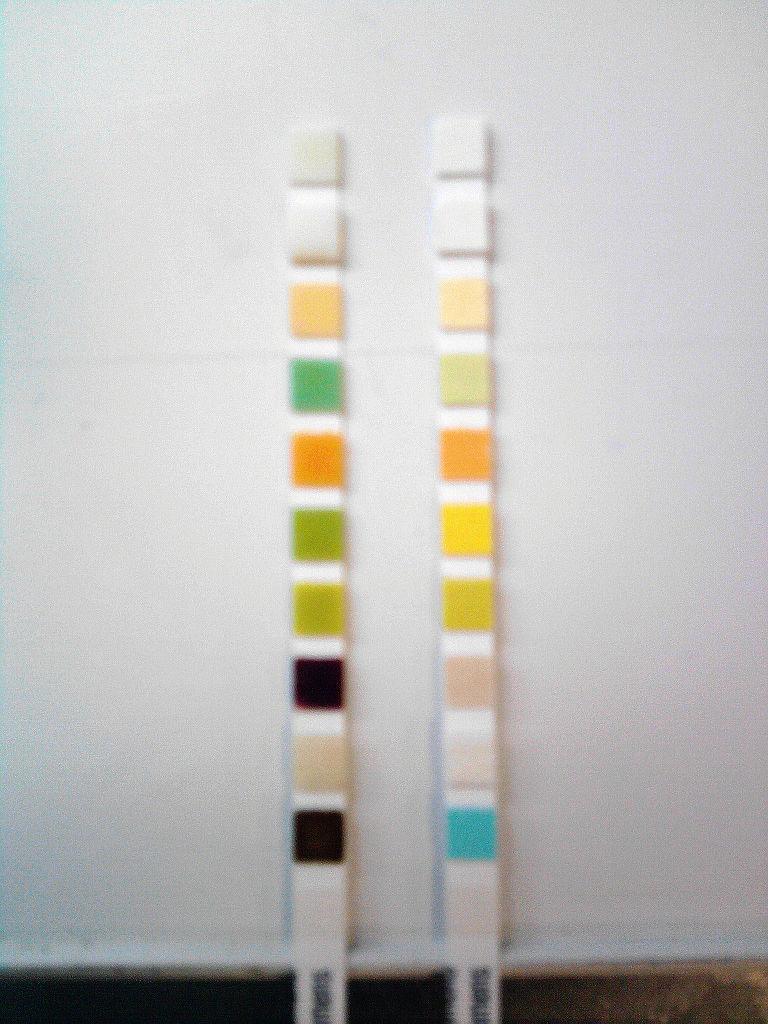 Dog Pregnancy Test Kit For Sale Philippines