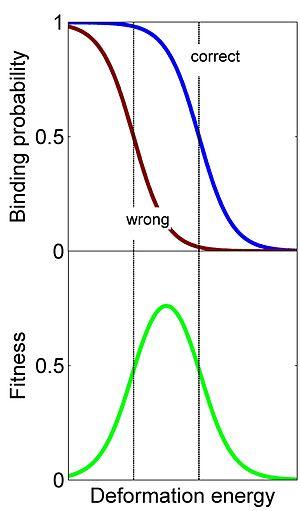 Conformational proofreading - Image: Conformational proofreading in homologous recombination