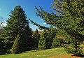 Conifer Plantation (1) (8651143592).jpg