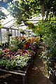 Conservatory potted plants Capel Manor Gardens Enfield London England 1.jpg