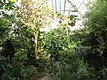 Cool Temperate House - Lyman Plant House, Smith College - DSC04361.JPG