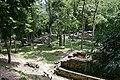 Copan, Maya ruins - panoramio - Frans-Banja Mulder (3).jpg