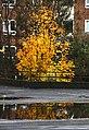 Copenhagen 2017-10-15 (24021790817).jpg