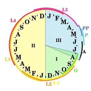 Coraebus florentinus zyklus.png