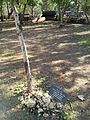 Corrie ten Boom tree.jpg
