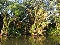 Costa Rica 74.DSCN3991-new (31093134436).jpg