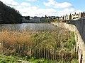 Craiglockhart Pond - geograph.org.uk - 1220588.jpg