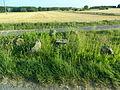Cromlech de la Croix, Beaulieu-lès-Loches.JPG