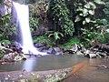 Curtis Falls Mt. Tamborine - panoramio.jpg