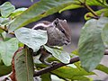 Cute Rodent.jpg